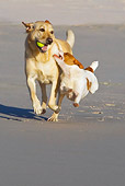 DOG 17 KH0031 01