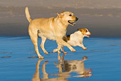 DOG 17 KH0032 01