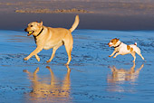 DOG 17 KH0033 01