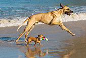 DOG 17 KH0034 01
