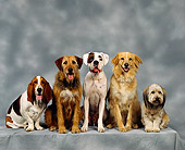 DOG 17 RK0001 15
