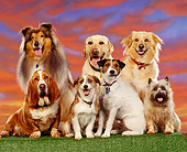DOG 17 RK0006 08