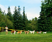 DOG 17 RK0008 14