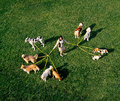 DOG 17 RK0012 23