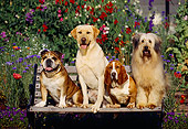 DOG 17 RK0017 11