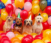 DOG 17 RK0037 04