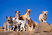 DOG 17 RK0052 32