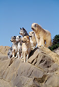 DOG 17 RK0052 95