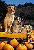 DOG 17 RK0058 02