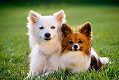 DOG 17 RK0069 03