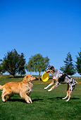 DOG 17 RK0083 06
