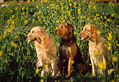 DOG 17 RK0084 02