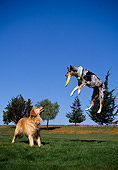 DOG 17 RK0090 01