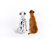 DOG 17 RK0108 01