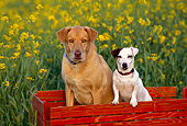 DOG 17 RK0110 06