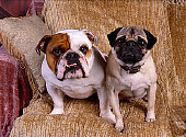 DOG 17 RK0512 06