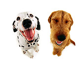 DOG 17 RK0520 01