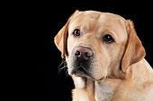 DOG 18 AC0008 01