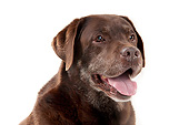DOG 18 AC0009 01
