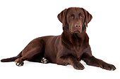 DOG 18 AC0013 01
