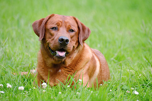 DOG 18 AC0014 01