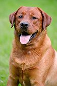DOG 18 AC0015 01