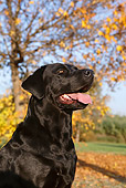 DOG 18 CB0001 01