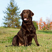 DOG 18 CB0002 01