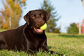 DOG 18 CB0003 01