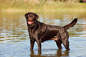 DOG 18 CB0004 01