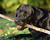 DOG 18 CB0018 01