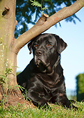 DOG 18 CB0019 01