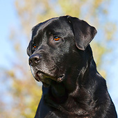 DOG 18 CB0020 01