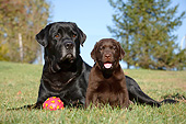 DOG 18 CB0021 01