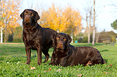 DOG 18 CB0022 01