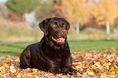 DOG 18 CB0023 01