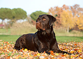 DOG 18 CB0024 01