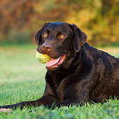 DOG 18 CB0027 01