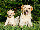 DOG 18 CB0030 01