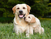 DOG 18 CB0031 01