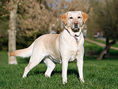 DOG 18 CB0033 01