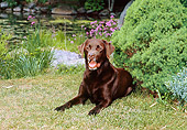 DOG 18 CE0032 01