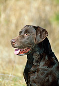 DOG 18 CE0034 01