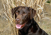 DOG 18 CE0035 01