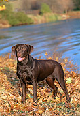 DOG 18 CE0039 01