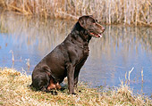 DOG 18 CE0040 01