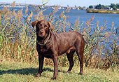 DOG 18 CE0041 01