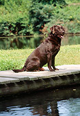 DOG 18 CE0043 01