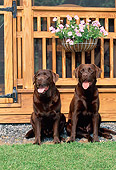 DOG 18 CE0045 01