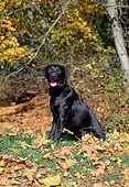 DOG 18 CE0048 01